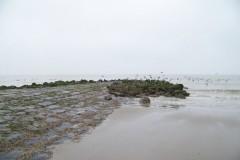 classe-de-mer-Bredene-2010-108