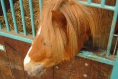 equitation_363