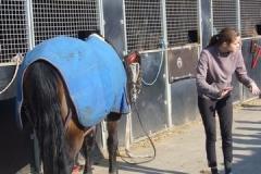 equitation_398