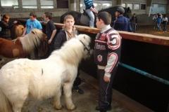 equitation_418