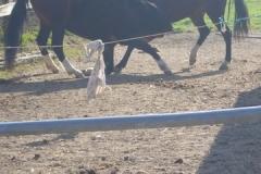 equitation_423