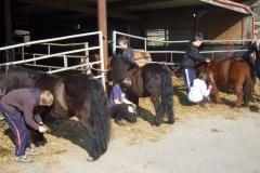 equitation_438