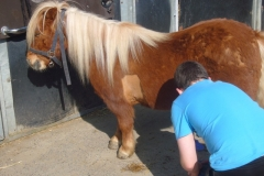 equitation_450