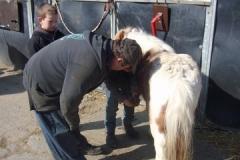 equitation_455