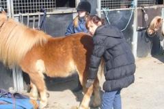 equitation_459