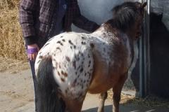 equitation_460