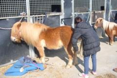 equitation_461