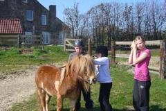 equitation_500